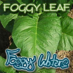 Foggy Leaf by Foggy Waters